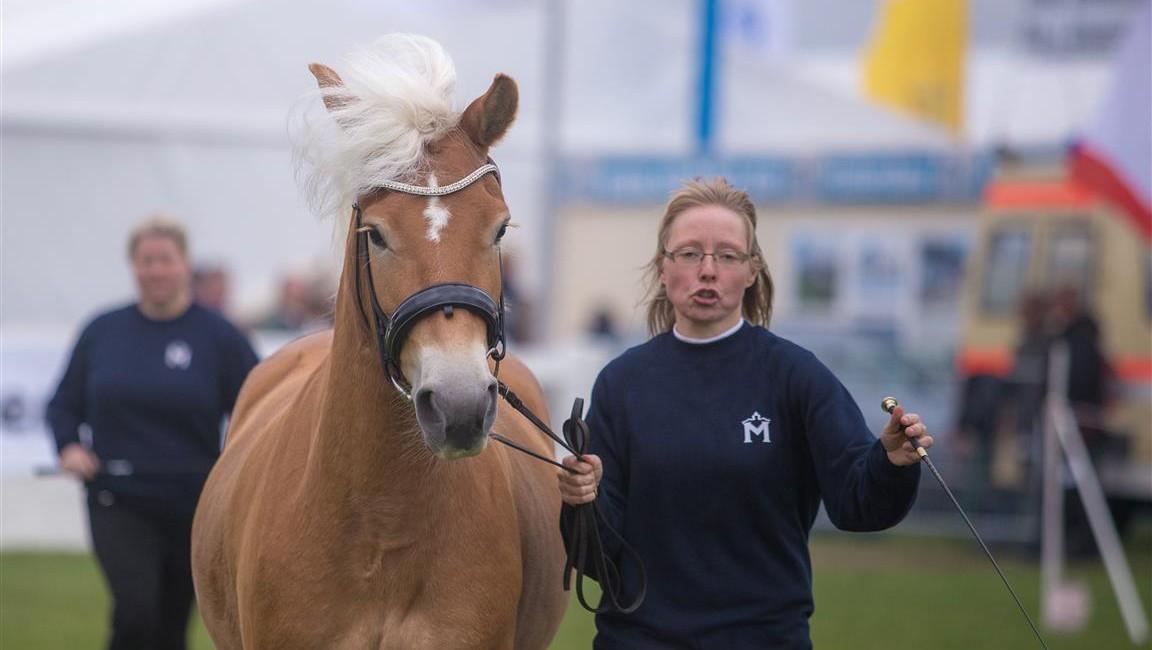 Aurora-Chérie von den Alleegärten erhält die Staatsprämie